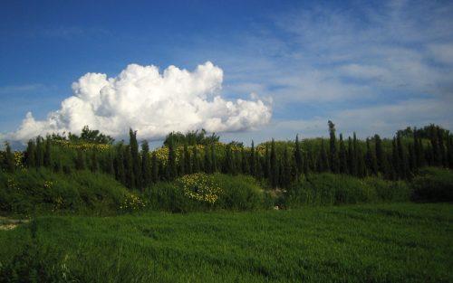 マヨルカの草原