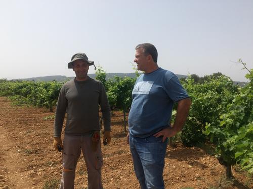 ブドウ園農作業