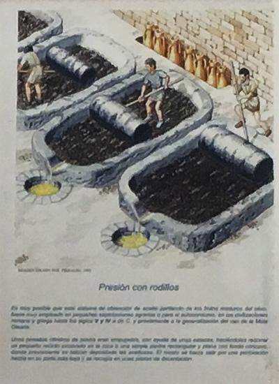 古代のオリーブオイル製造方法3