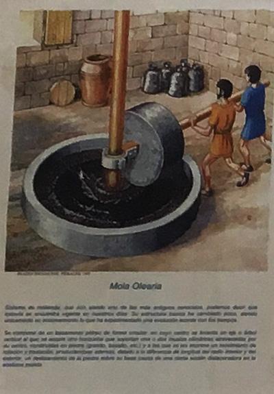 古代のオリーブオイル製造方法