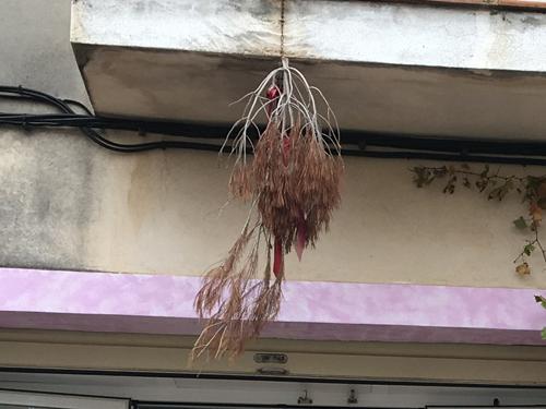 マヨルカワイナリーの松の枝