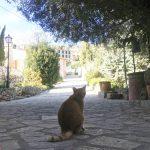 バルデモサのホテルの猫