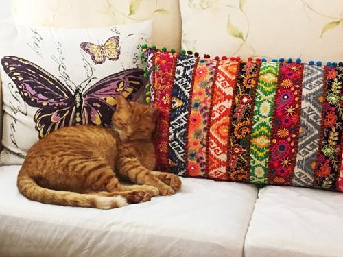 バルデモサのホテル猫